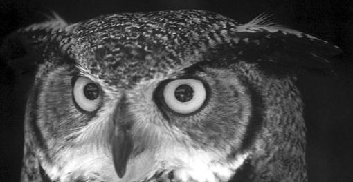 owl-face.jpg