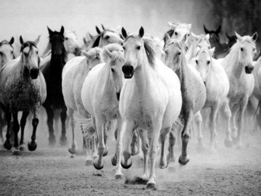horses-gallop.jpg