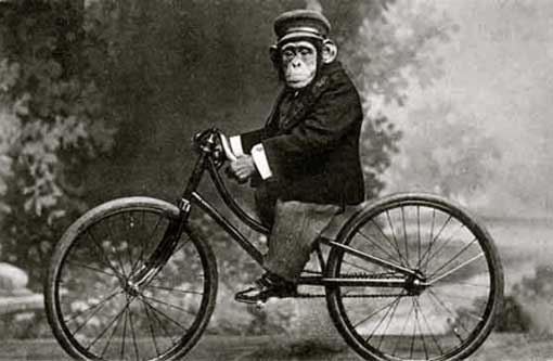 monkey_on_bicycle_vintage.jpg