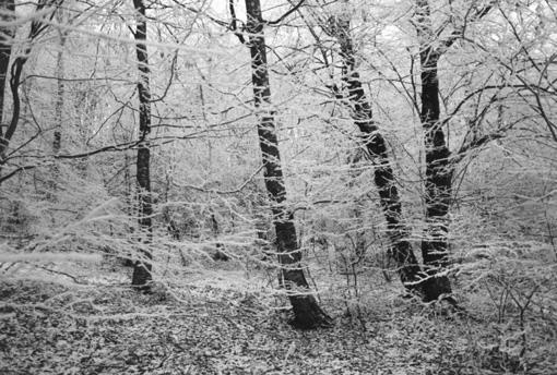 snowyfrost.jpg