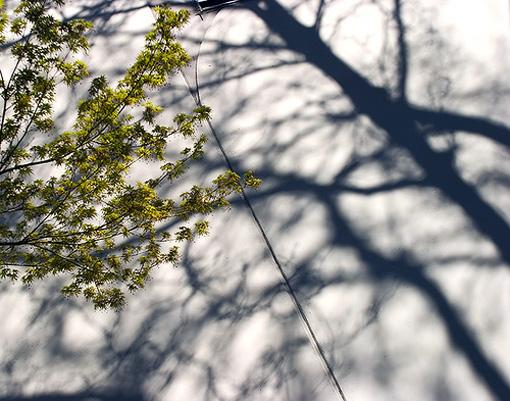 treeshadow.jpg